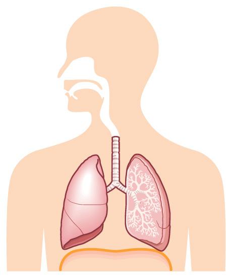 呼吸器の基礎知識
