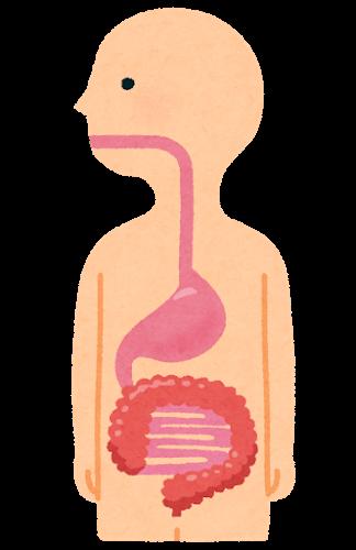 消化器の基礎知識